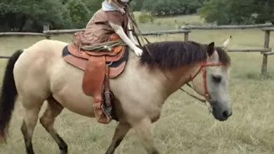 Photo of Талантливый лабрадор научился ездить верхом на лошади и покорил сеть