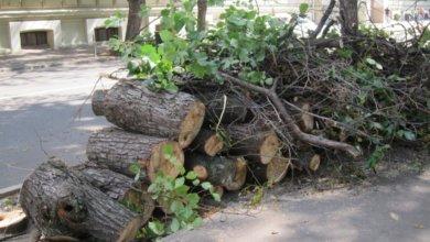Photo of В Днепре за 3 000 000 гривен вырежут сотни деревьев