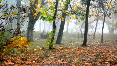 Photo of В Днепре будет туманно и облачно