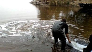 Photo of В Каховское водохранилище выпустили полторы тонны рыб