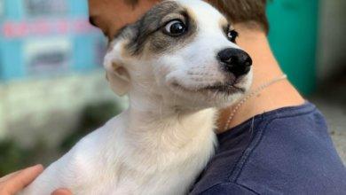 Photo of В Днепре собак кормят отравленными сосисками