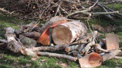 Photo of В Днепре на спил деревьев планируют потратить еще 3 000 000 гривен