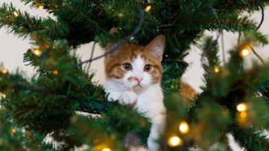 Photo of Любопытный кот застрял в рождественской ели и стал звездой сети