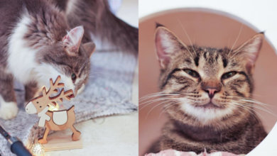 Photo of В Днепре волонтеры устроили котам новогоднюю фотосессию