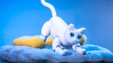 Photo of В Китае создали «кошку-робота»