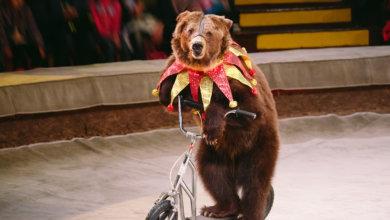 Photo of В Украине запретят использовать животных в цирках
