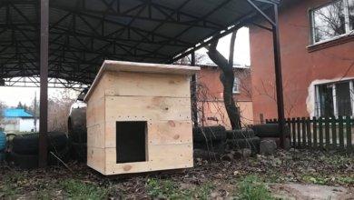 Photo of Жители Днепра построили будку для бездомной собаки