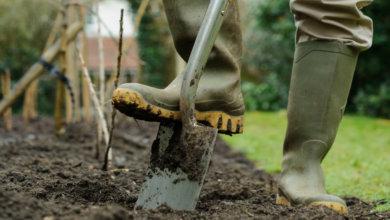 Photo of В Днепре бесплатно раздают семена деревьев