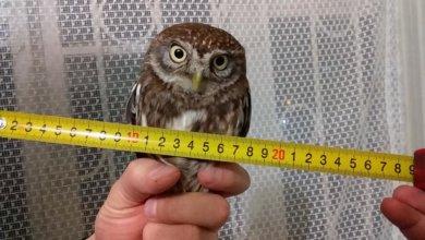 Photo of В Днепре птицы часто попадают в ДТП: как помочь пернатым