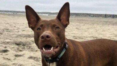 Photo of Логопед из Калифорнии научила свою собаку «разговаривать»
