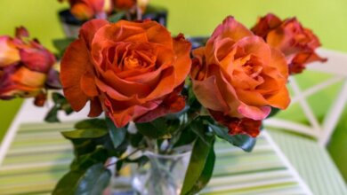 Photo of Горсовет Днепра планирует потратить 45 000 гривен на розы