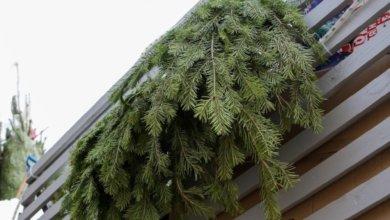 Photo of Куда в Днепре сдать новогоднюю ёлку для утилизации