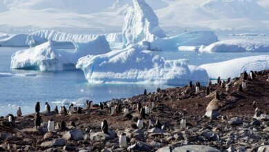 Photo of В Антарктиде во второй раз за месяц зафиксировали температурный рекорд