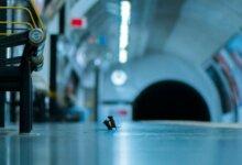 Photo of Драка мышей в лондонском метро названа лучшим фото дикой природы за 2019 год
