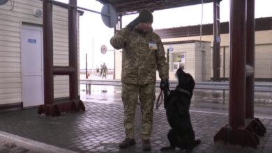 Photo of Пограничники научили собаку отвечать на лозунг «Слава Украине»